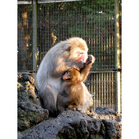 20080105_monkey_2