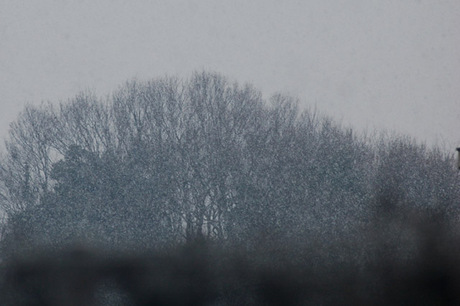 20080123_snow1