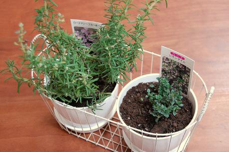 20071223_herb