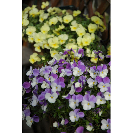 20080316_garden4