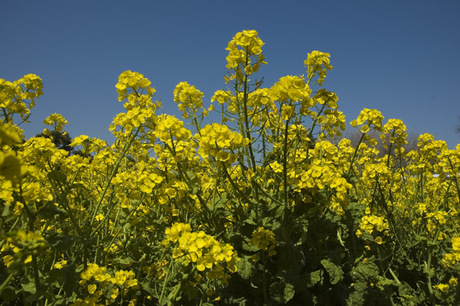 20080322_flower1