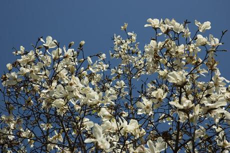 20080322_flower4