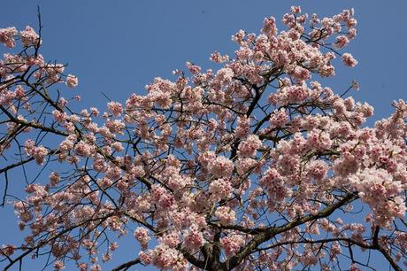 20080322_flower5
