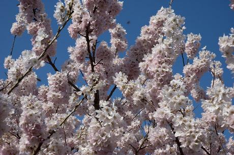 20080322_flower6