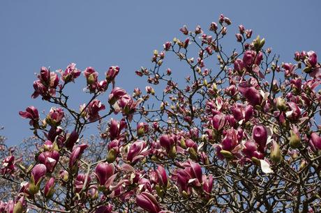 20080322_flower7