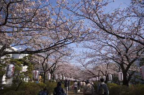 20080329_dankazura1