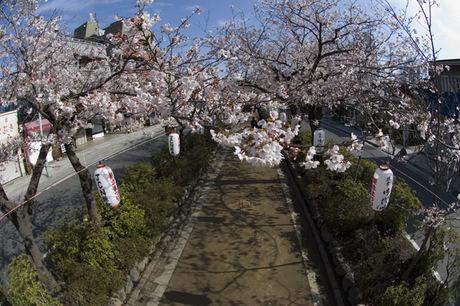 20080329_dankazura4