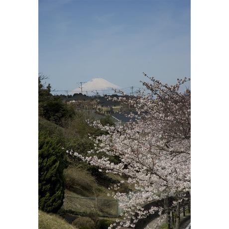 20080329_sakurayama1