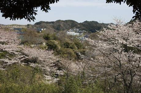 20080329_sakurayama3