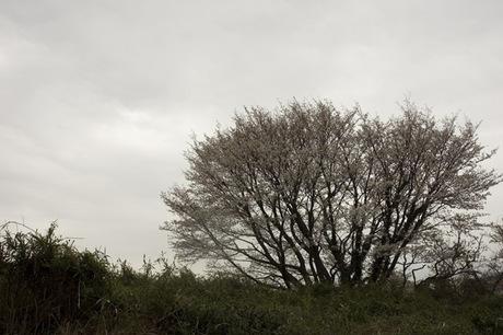 20080330_daimine3