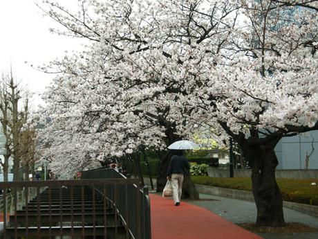 20080330_sunaoshi1_2