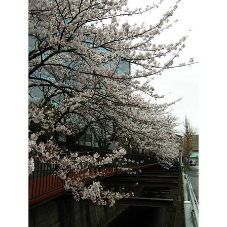 20080330_sunaoshi2