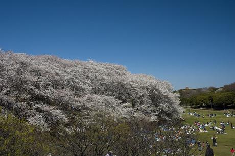 20080401_negishi_park3