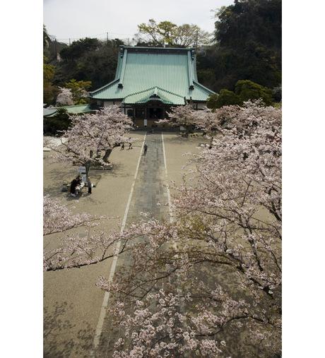 20080404_komyoji1