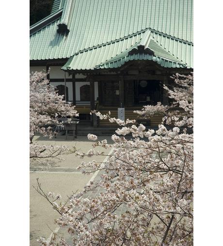 20080404_komyoji2