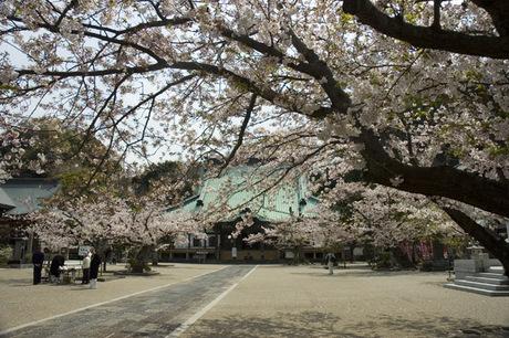 20080404_komyoji3