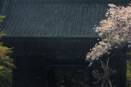20080404_myohonji1