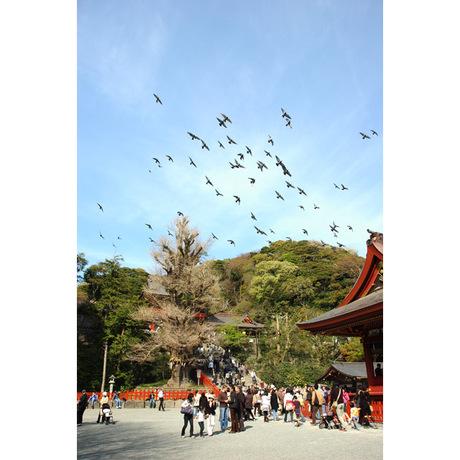 20080404_tsuruhachi2