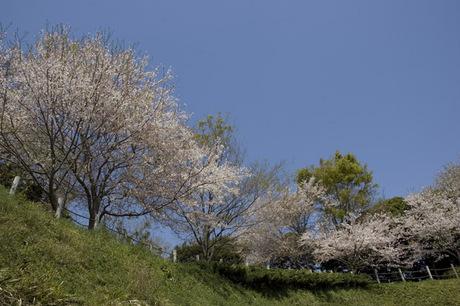 20080405_chuokoen1