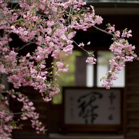20080413_kaizoji1