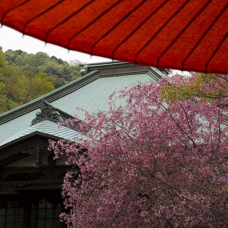 20080413_kaizoji2_2
