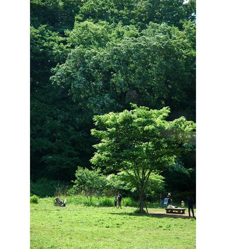 20080506_chuopark2