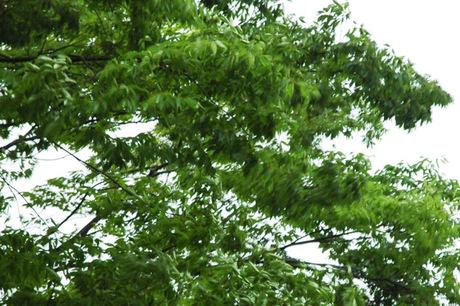 20080520_storm