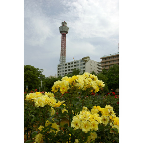 20080528_1_yamashitapark1