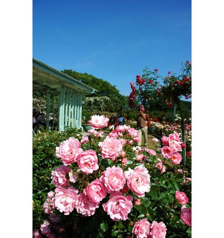 20080601_flowercenter1