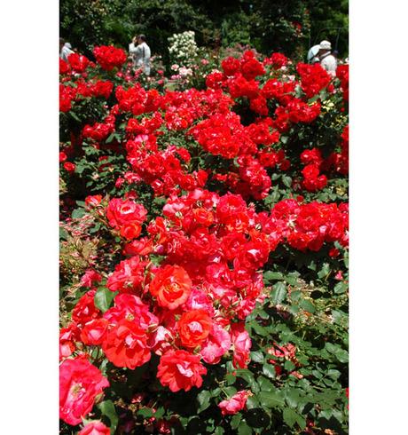 20080601_flowercenter2