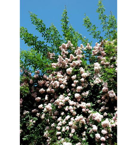 20080601_flowercenter3