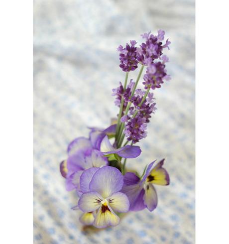 20080604_lavender