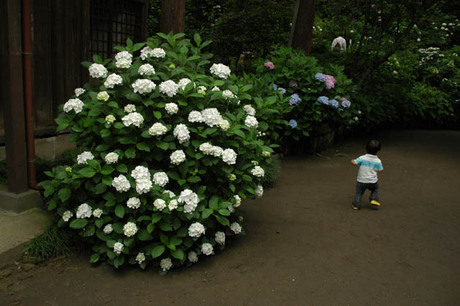 20080608_goryo3