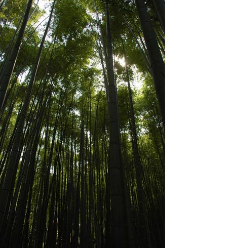 20080614_houkokuji1