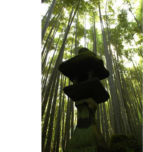 20080614_houkokuji2