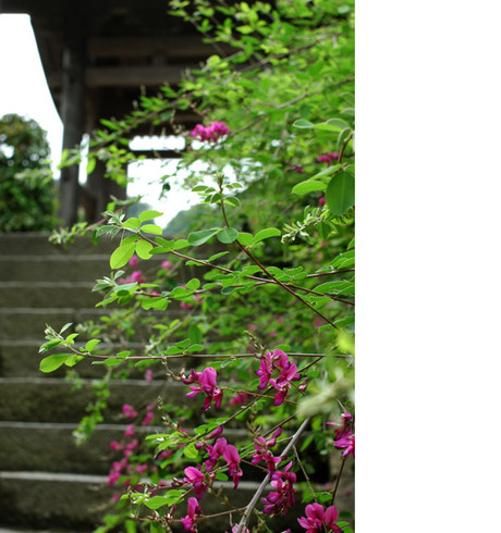 20080621_kaizoji1