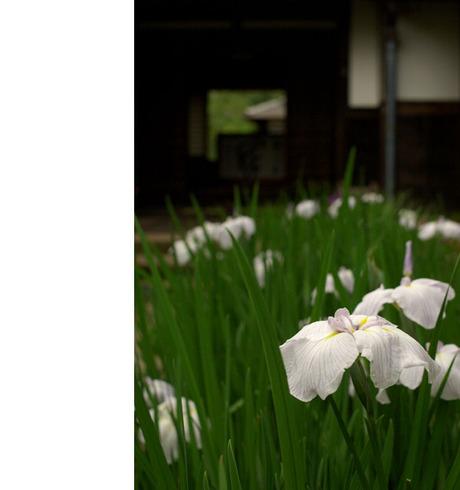 20080621_kaizoji2