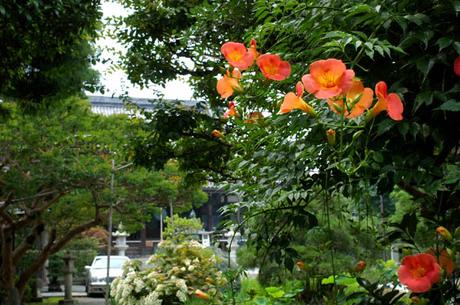 20080705_hongakuji