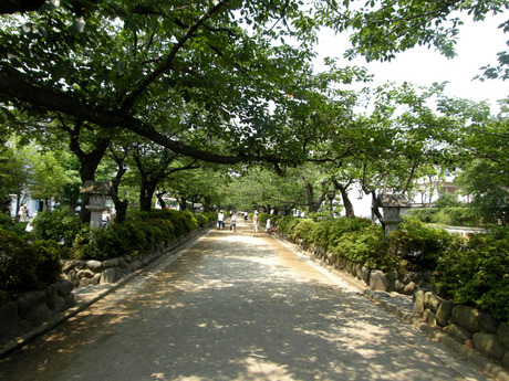 20080706_dankazura