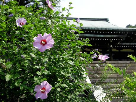 20080712_ryuhoji1