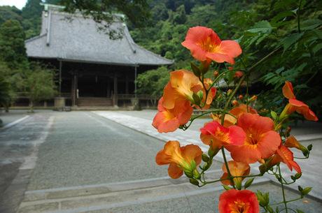 20080713_myohonji1_2