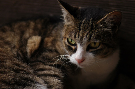 20080713_myohonji_cat1