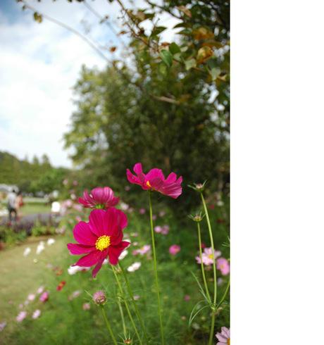 20081018_flowercenter1