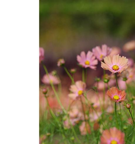20081018_flowercenter7_2
