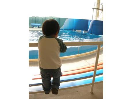 20081105_enosui