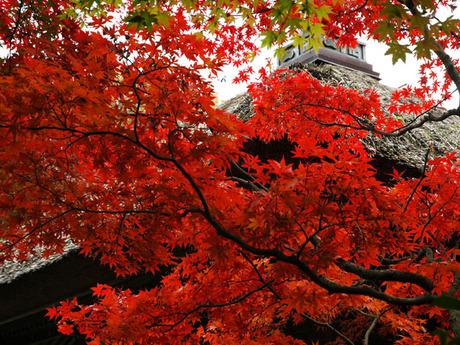 20081129_01_chojuji