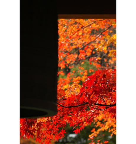 20081129_02_kaizoji4