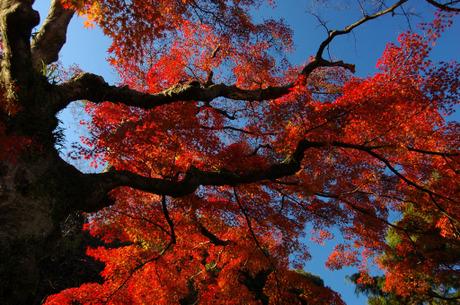 20081203_engakuji1