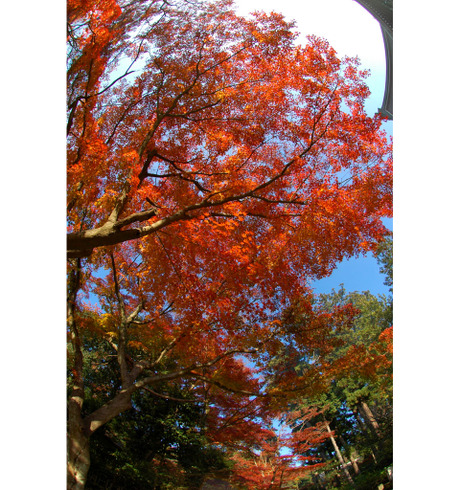 20081203_engakuji3