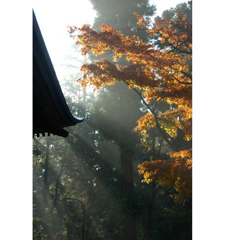 20081203_engakuji4